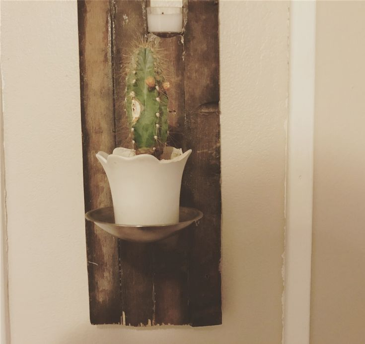 cactus on the wall. interior design