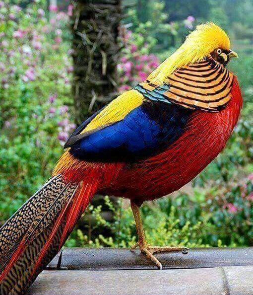 Colores de la bandera de Colombia en un ave. Hermosa.