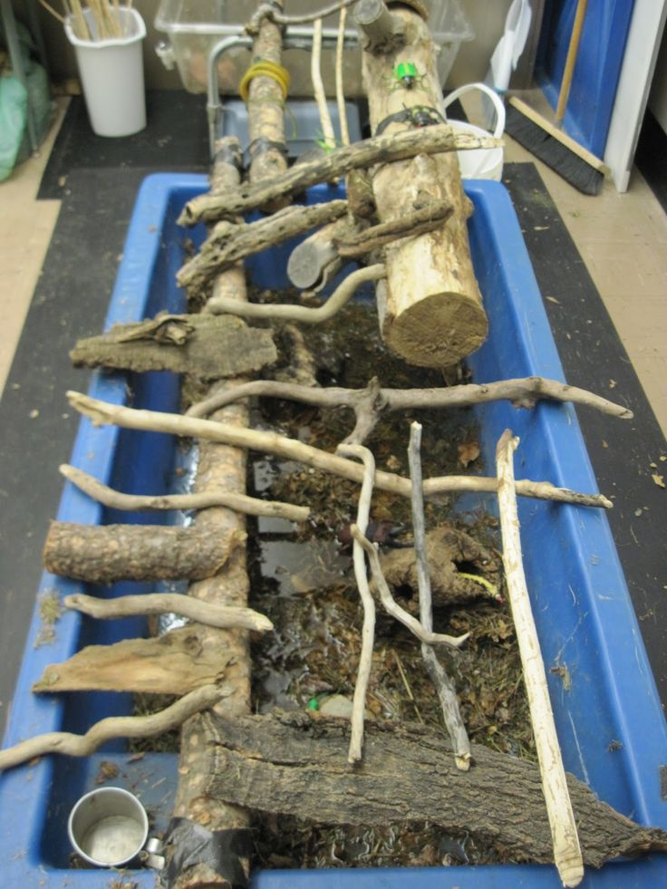 SAND AND WATER TABLES: SWAMP II