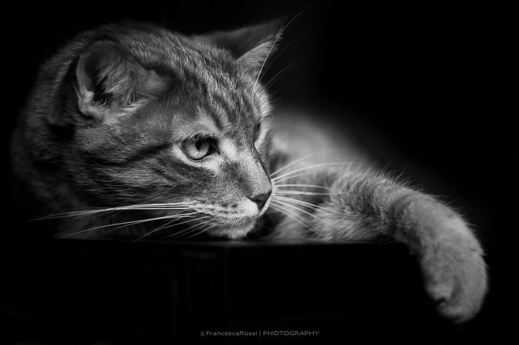 relax felino by Francesca Rossi - Photo 130011953 - 500px