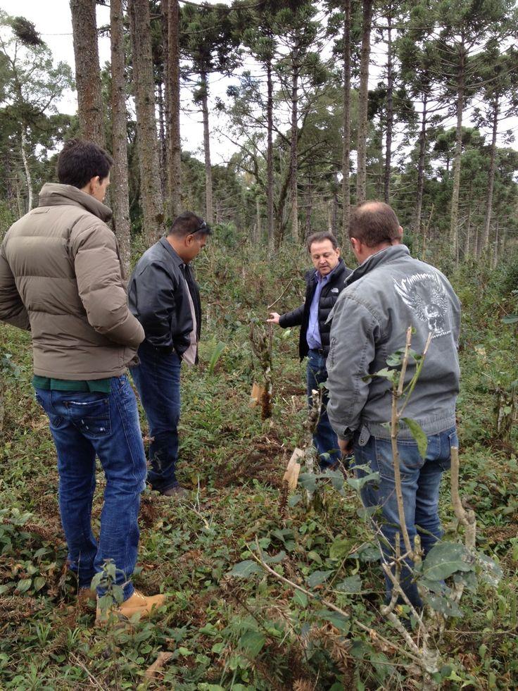 VP, Fred Alejo (2nd from left) inspecting Yerba Mate field in Brazil.