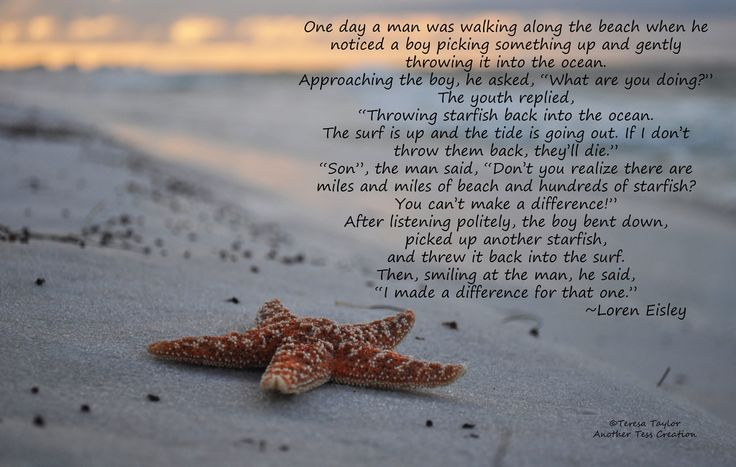 starfish on the beach - Google Search