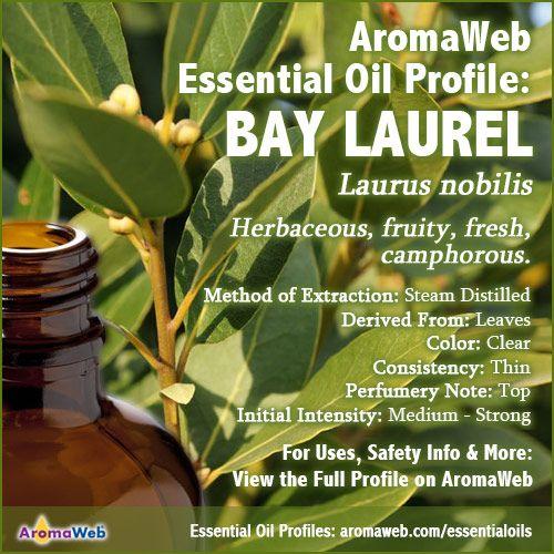 Bay Laurel Essential Oil Profile | The Oily Owl | Essential oils