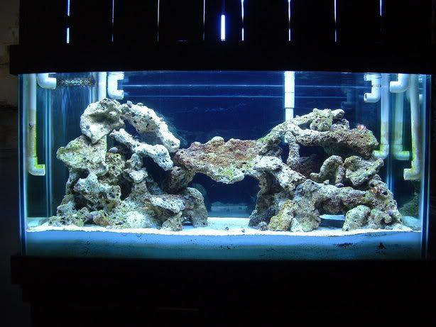 55 Gallon Live Rock Aquascape | Let me See your 120 gallon Aquascaping