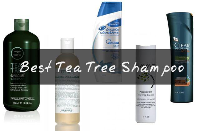 Best Tea Tree Shampoo for Itchy Scalp with Tea Tree Oil & Mint