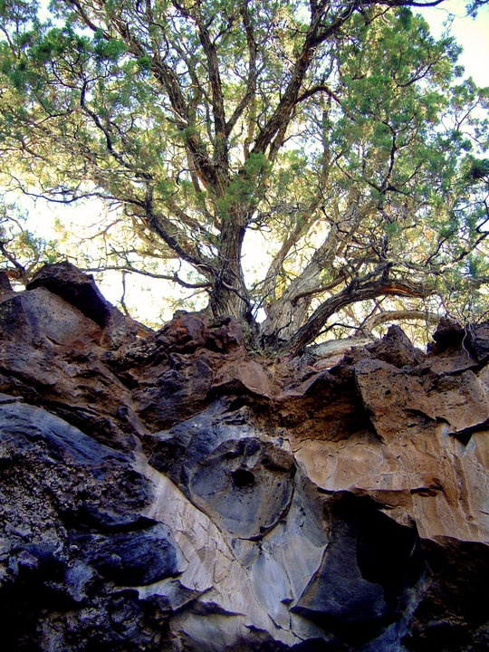Images about nordic roots runes heathen asatru on