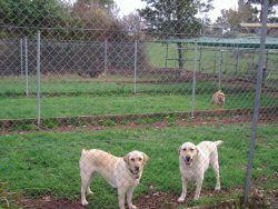 Double dog accommodation melbourne