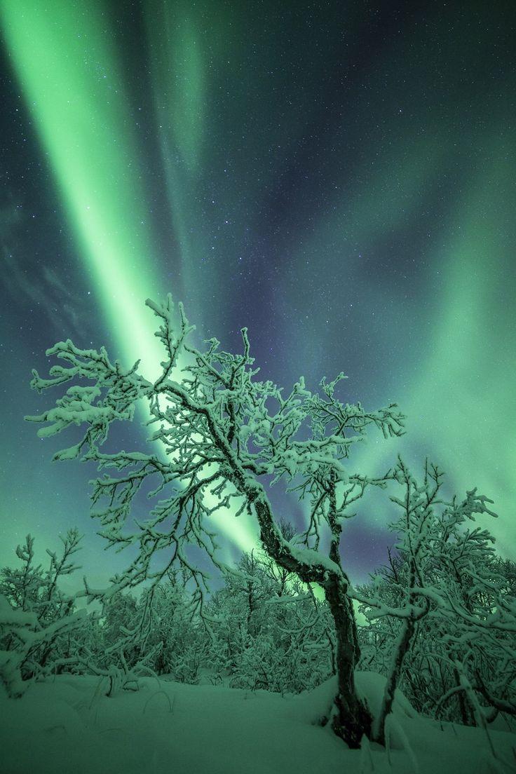 Spirit Of Forest - Photo : Nicolas Raspiengeas