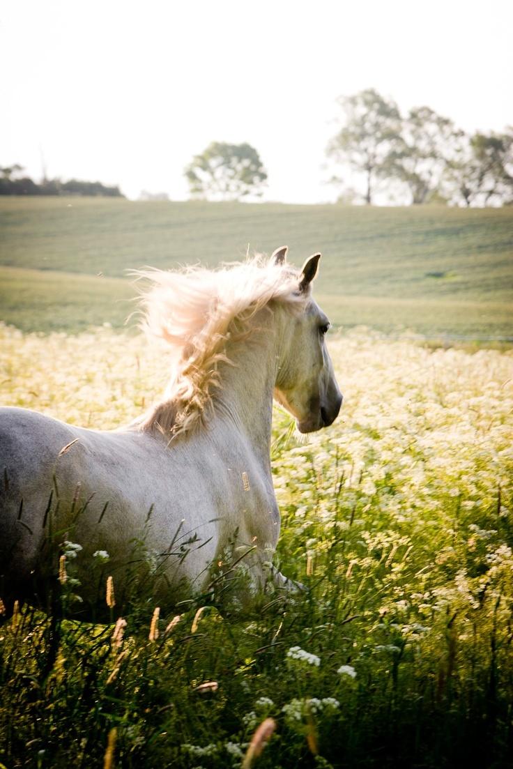 atlar kedinizi özgür hissettirir..
