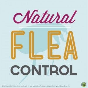 Natural Flea Control Part II: Treating your home