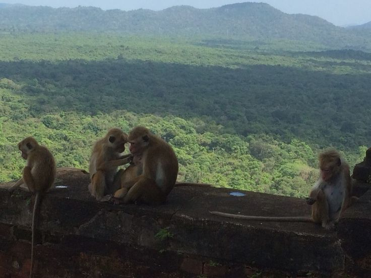 Monkey Family - Grooming