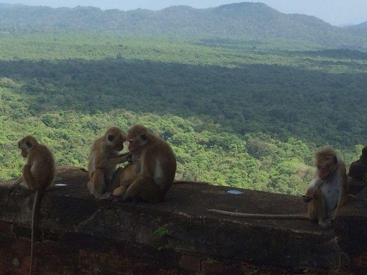 Monkey Family - Grooming
