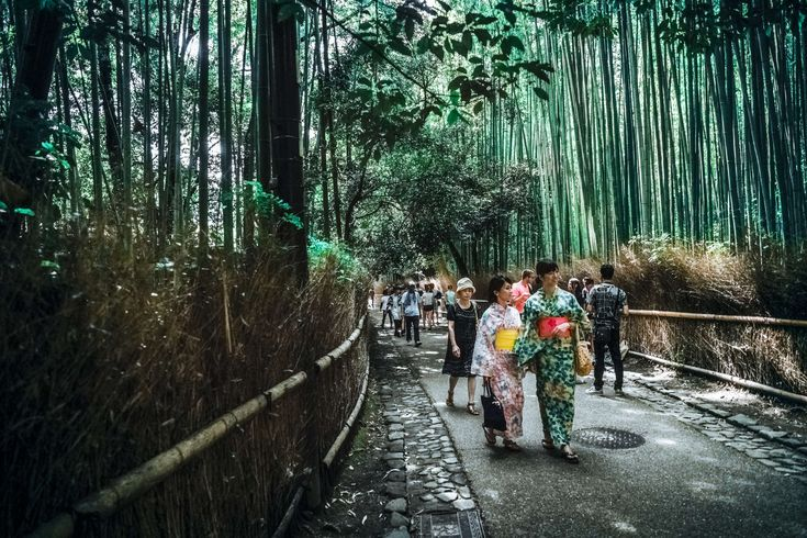 #bamboo trees #bridge #city #daylight #environment #guidance #japan #landscape #light #motion #nature #outdoors #park #pavement #people #rain #recreation #road #scenic #street #tourist #travel #trees #urban #walk #water #w