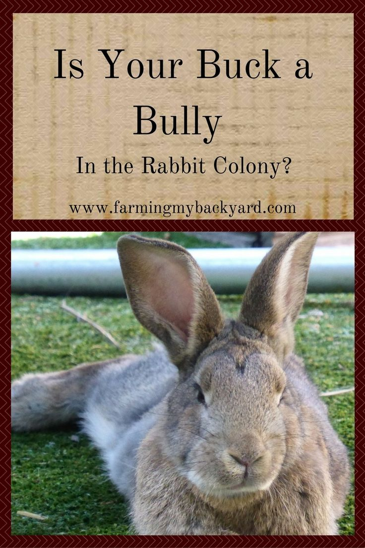 290 best rabbits images on pinterest raising rabbits meat