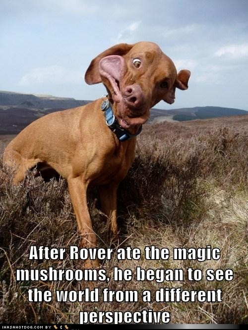 After Rover ate the magic mushrooms, he began to see the world from a different perspective