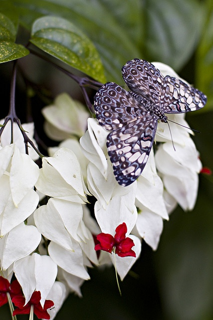 Beautiful black and white butterfly.