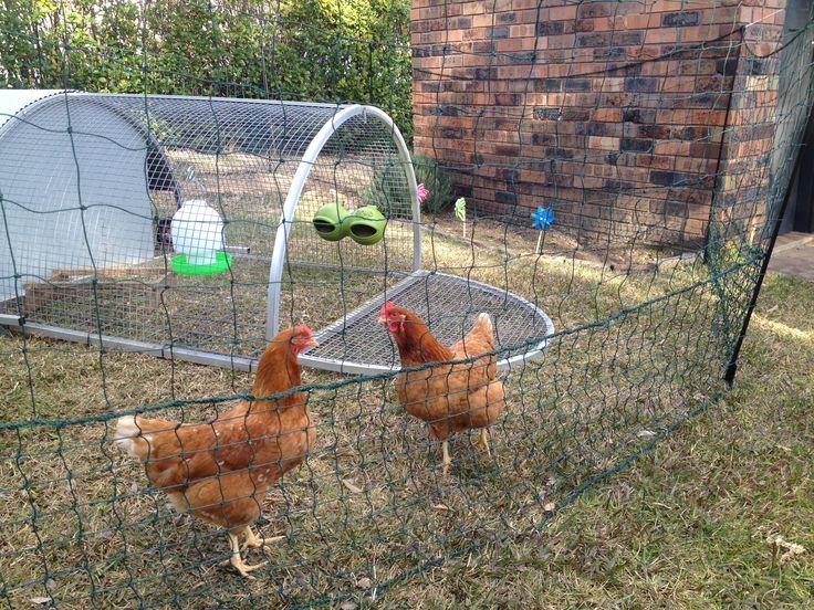 Best 20 Chicken Fence Ideas On Pinterest – Home Decor Ideas