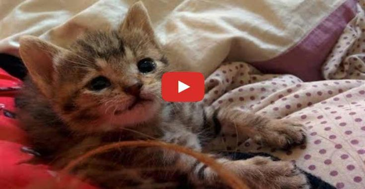 Stray Kitten Survived Against All Odds And Can T Stop Smiling Now Cats And Kittens Kittens Cute Kitten Gif