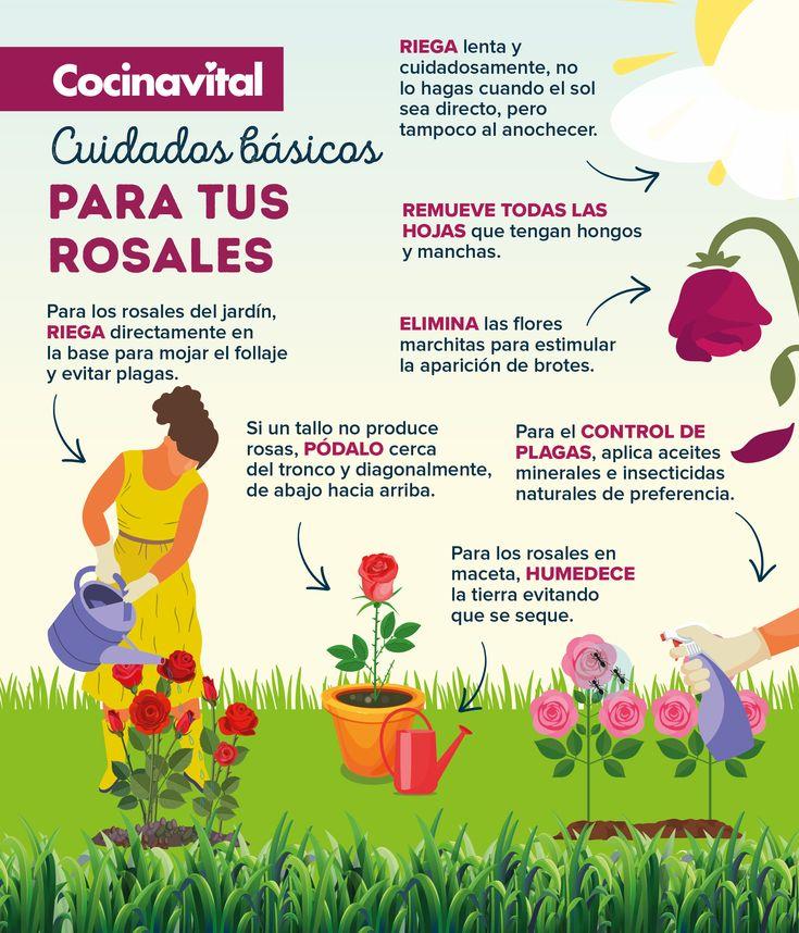 Si quieres tener un increíble rosal cuidado a la perfección, ¡te invitamos a checar estos increíbles tips! Sabrás cómo regarlos, podarlos y más. Cactus, Natural, Planting, Day, Blog, Gardens, Growing Plants, Greenhouse Gardening, Health Recipes