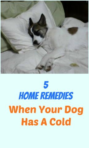 Natural Cures For Dog Coughs