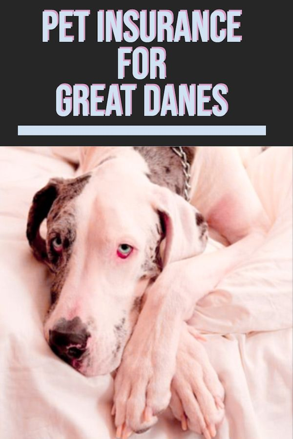 Breaking Down Pet Insurance For Great Danes Dog Insurance Great