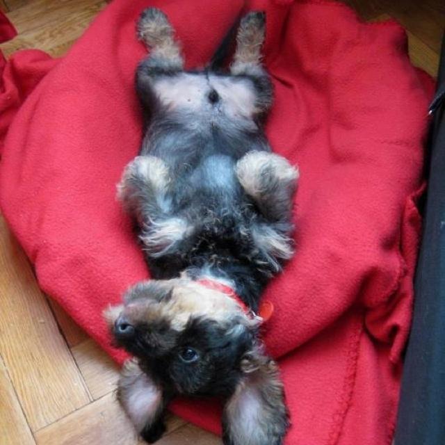 les 32 meilleures images du tableau chien rigolo sur pinterest animaux mignons chien rigolo. Black Bedroom Furniture Sets. Home Design Ideas