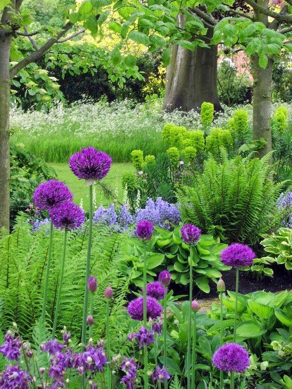 Alliums Beautiful Garden