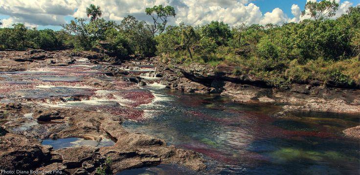 Caño Cristales . El río más lindo del mundo. El río de 5 colores. Descubre este paraiso natural en Colombia. http://www.awakeadventures.com/expedicion/ca%C3%B1o-cristales-0