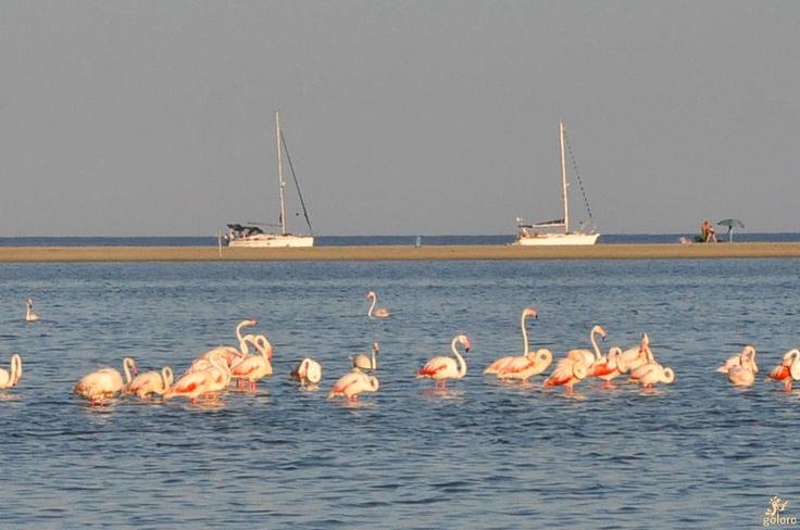 Wild pink flamingos | goloro.com