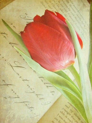 Una flor cada día.. .