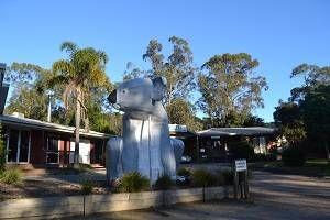 koala at koala park resort
