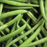 Growing Bush Beans from Seeds - How to Grow Bush Beans from Seed - West Coast Seeds