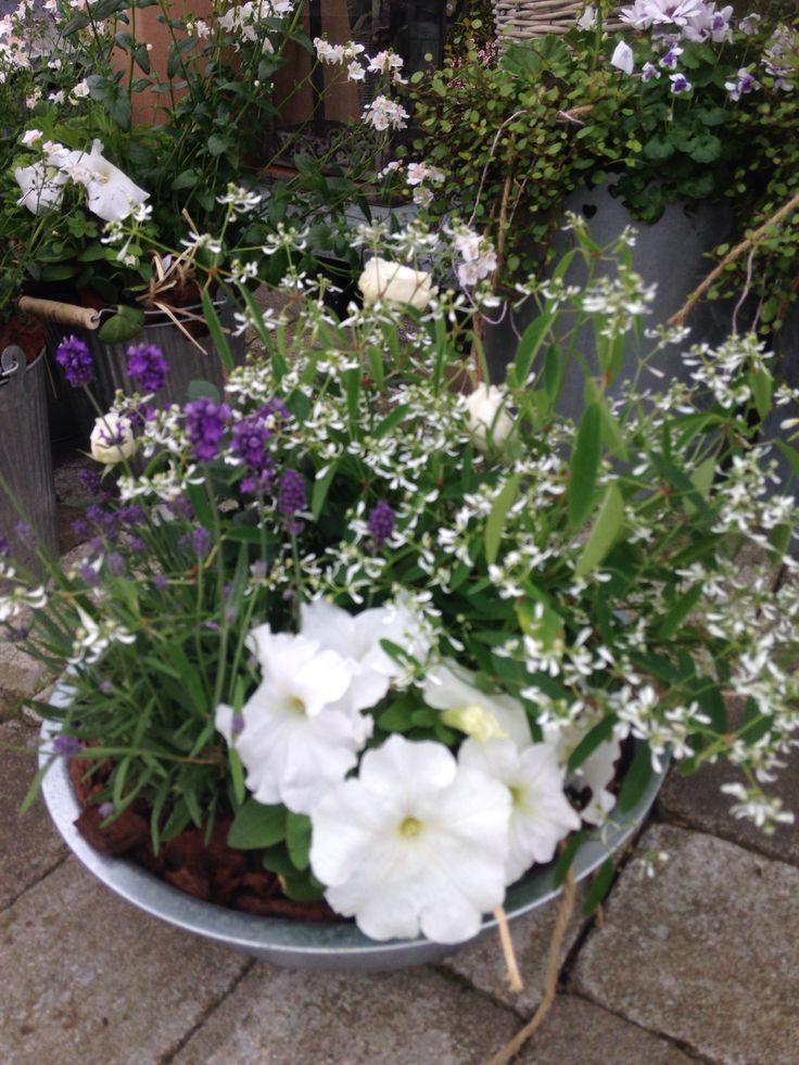 Glad Pingst ! Sommaren har kastat sig över oss med sol och lätt regn om vartannat... Så fantastiskt vackert !
