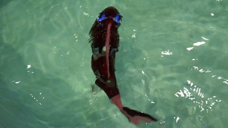 물속을 헤엄치는 신기한 로봇 물고기 '마이로' http://i.wik.im/282497