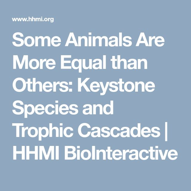 Some Animals Are More Equal than Others: Keystone Species and Trophic Cascades | HHMI BioInteractive