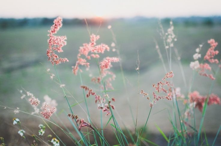 Rural scene with grass and flowers