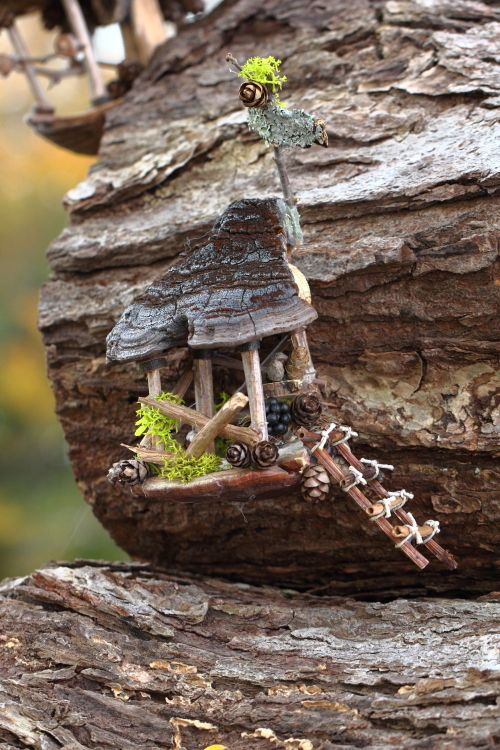 Fairy house with fungi roof!!!