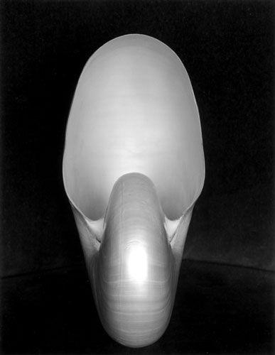 Shell una de mis imágenes favoritas de naturaleza muerta de Edward Weston, blanco y negro de exquisita sencillez y pulcritud.