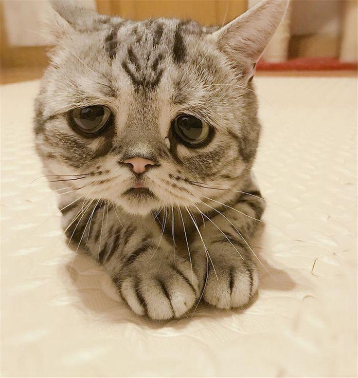 самых востребованных губастый котик фото одной версий, граф