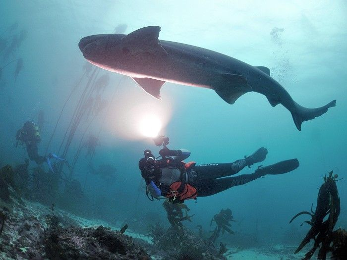 Volunteer with Via Volunteers in South Africa and learn to Scuba Dive in Cape Town while you're here! Join this internationally accredited PADI Open Water Diver Course and open up a lifetime of intense adventures below the waves.