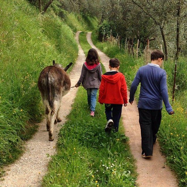 Asino chi legge. Passeggiate con letture per bambini ed asini ... da giugno sul Monte Pisano !