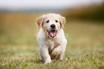 Mantrailing ist auch für junge Hunde geeignet.