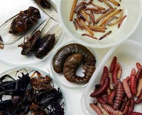 From Gourmet Bug Restaurants to Sweet Arachnid Treats these edible insect delicacies have revolutionized the way chefs and restaurant owners conceive of food.