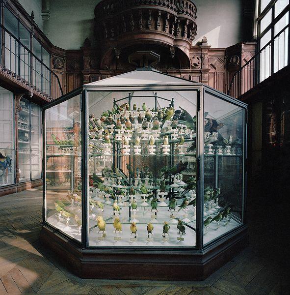 Museum National D'Histoire Naturelle | Paris, France 1982