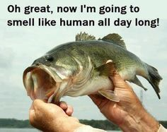 Large mouth bass fishing                                                                                                                                                     More