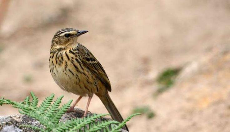 O risco de extinção para muitas espécies está subestimado, sugere um novo estudo