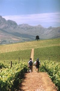 Wine in the Western Cape