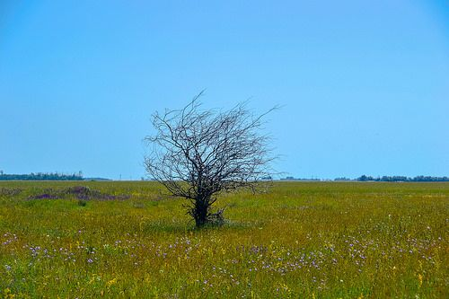 The wind blew on a lonely tree photo by beatriceverez