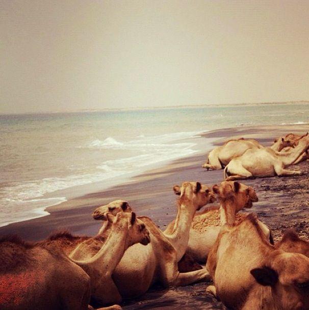 Beach Somalia Camels