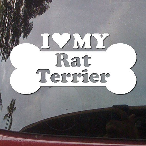 I Heart My Rat Terrier  Love Dog Bone Pure Breed  by DecalsDirect, $3.99